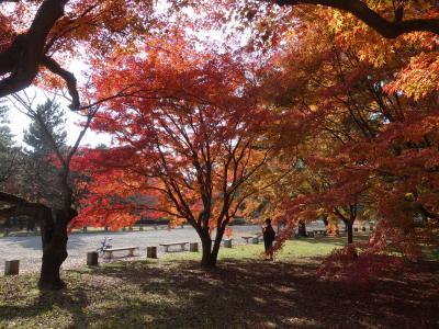 御苑の紅葉。人が少なく,身近にそばに寄れます。紅葉の中に入れます。すばらしいところです。