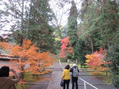 京都の紅葉と着物姿―知恩院、円山公園、花見小路など歩き回るー