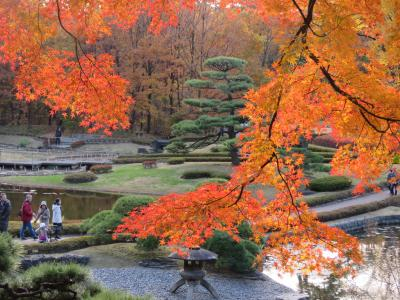 都心の紅葉を見るために東御苑を訪問する①大手門~二の丸庭園~汐見坂迄
