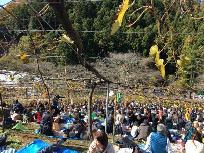 ココファームワイナリーの収穫祭へ行ってきました☆