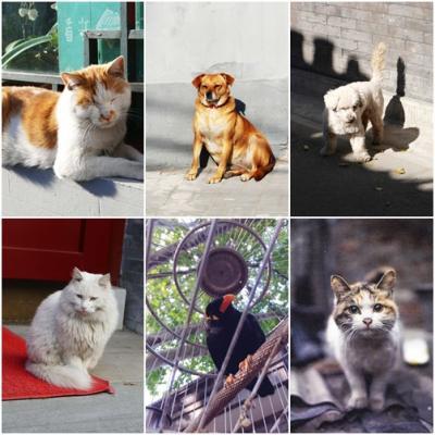 中国北京漫々悠々の記 ④ ー 胡同で見かけた愛すべき動物たち