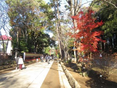大宮氷川神社参拝と大宮公園散歩