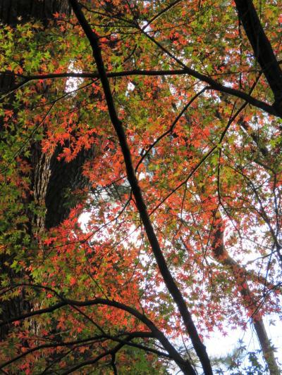 都心の紅葉を見るために東御苑を訪問する②汐見坂~本丸~大手門迄