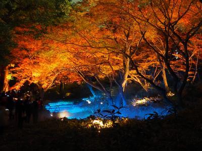 碧く輝く今年の六義園の紅葉と大名庭園のライトアップ