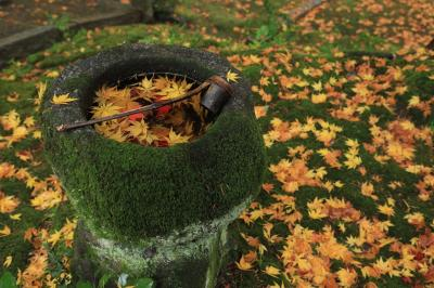 苗秀寺と積善寺の散り紅葉