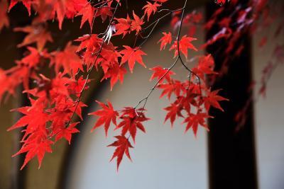 2017 京の紅葉散歩 常照寺