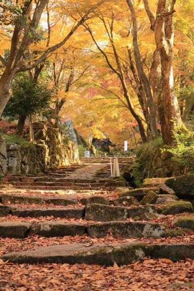 紅葉も真っ盛り♪ 晩秋の湖東三山百済寺は期待以上だった♪