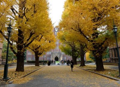 2017年 晩秋 東京大学本郷キャンパス 黄葉 赤門ラーメンが旨かった。