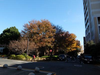 2017年 晩秋 東京大学 本郷キャンパスで