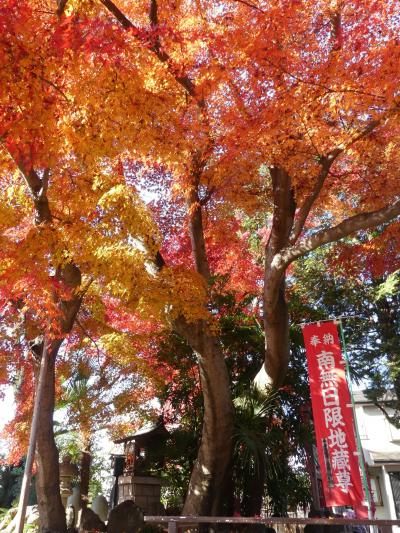 日限地蔵尊 観音院の紅葉_2017(2)_落葉が始まっていますが、まだ綺麗です。(群馬県・桐生市)