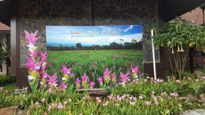 7-8月に咲く自然群生クルクマ(パーヒンガーム国立公園) とピーマーイ遺跡 クルクマ編