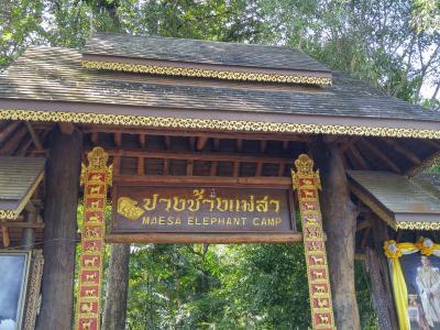 チェンマイ、イーペンライナーとバンコク観光 6 チェンマイで象と戯れる