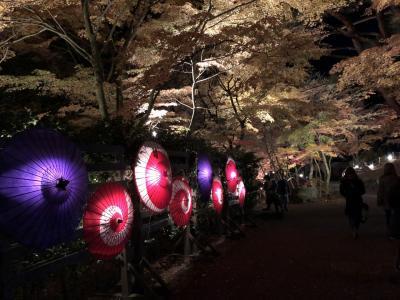 2017年12月 修善寺虹の郷 紅葉ライトアップ