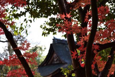 2017 伊賀の紅葉散歩 観菩提寺(正月堂)