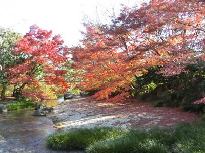 小春日和の穏やかな日、大阪万博記念公園・日本庭園をの~んびり紅葉散歩。(2017)