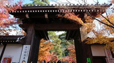 2017年京都の紅葉「永観堂」