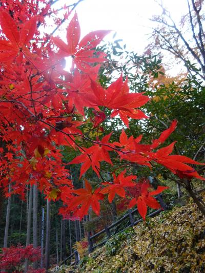 秩父の紅葉狩り 東郷公園秩父御嶽神社