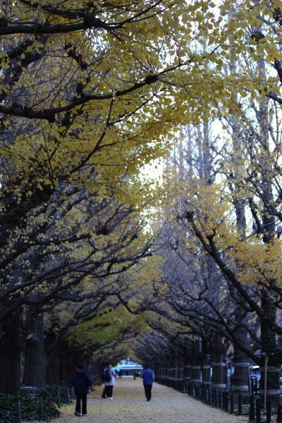 神宮外苑のいちょう並木5日では遅かった!