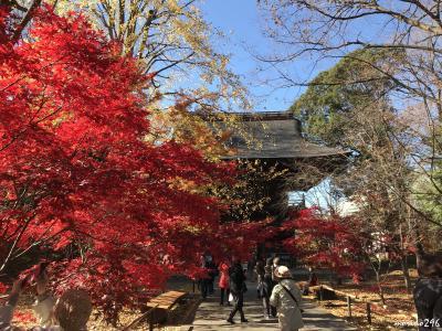 2017 紅葉の見納めは、九品仏浄真寺と豪徳寺へ