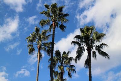 宮崎神宮、宮崎県護国神社に参拝。JR宮崎空港線に乗り、宮崎空港を楽しむ。