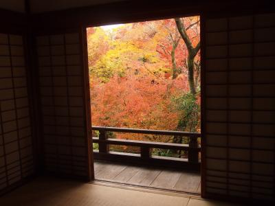 秋の京都2017 一人旅 その2 ~清凉寺、宝筐院、厭離庵、大覚寺~