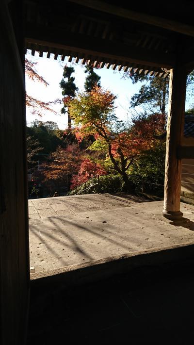 紅葉を見に来た鎌倉へ行ってきました。