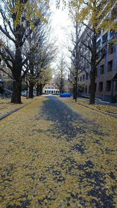 東京大学の銀杏を見に行ってきました。