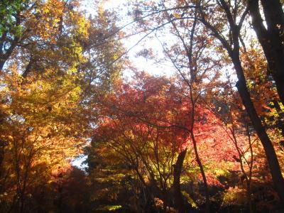紅葉も終わりかけでしたが、平林寺へ