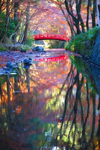 ぶらりと晩秋の小國神社へ