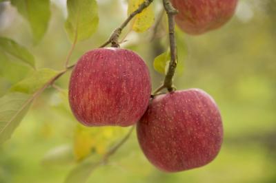 りんごの産地 山形県西村山郡朝日町をぶらぶらお散歩