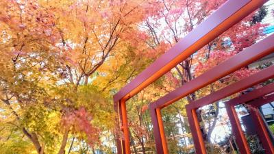 東京都心の紅葉はまだまだ捨てたもんじゃなかった!~文楽鑑賞で国立劇場へ向かう道すがら