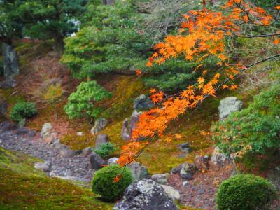 残り紅葉を追いかけて京都へ3、相国寺