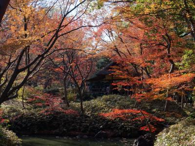 秋の六義園と旧古河庭園 2017