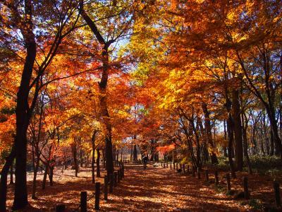 平林寺へ駆け込みのもみじ狩りへ!散った紅葉も風情あり!