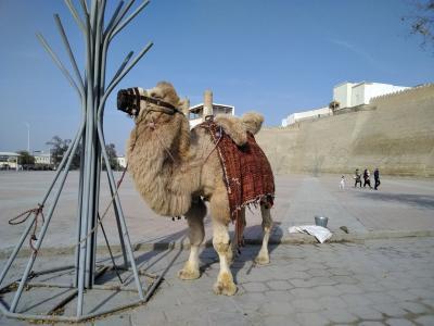 骨折したけどウズベキスタン行ってみた。(個人旅行)NO.2