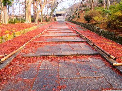 2017年最後の紅葉を求めて1泊二日京都の旅。敷きモミジの毘沙門堂門跡と渉成園 (枳殻邸)と京都のお蕎麦