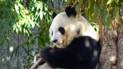 神戸ルミナリエ鑑賞の旅(12) 神戸市立王子動物園 下巻。