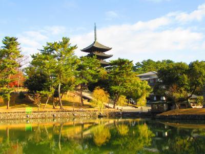 """そうだ、京都行こう。""""日帰りで奈良へ。鹿と戯れる"""" 前日痛めた足で前に進めず途中棄権。来年リベンジするぞと決めた奈良の旅編"""