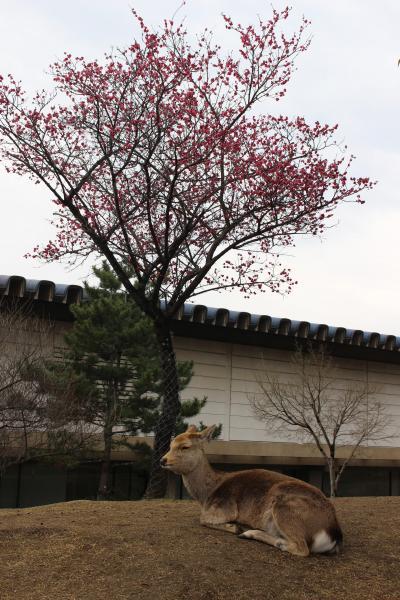 2017年 関西食い倒れ?オフ会とUSJの旅【5】ガブちゃんと巡る初めての奈良☆お寺巡りと美味しい物たち~御朱印デビューしました~