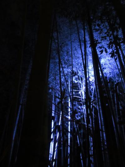 """そうだ、京都行こう。""""冬の京都・お茶の里、宇治と花灯路、嵐山の旅"""" 人前ですってんころりん。恥ずかしいやら痛いやら。(>_<)散々だった嵐山編"""