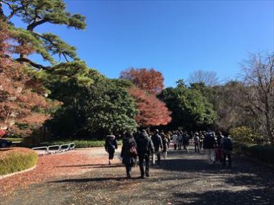 2017年12月 皇居の乾通りの紅葉を見に行ってきました。