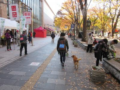 2017年11月26日:ウォーキング大会「歩いて知ろうわがまち府中」るんるんコース(約13km)に参加