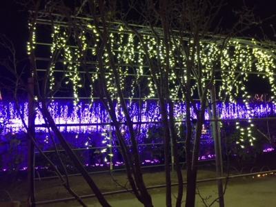 あしかがフラワーパークの光と花の世界