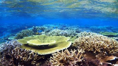 八重干瀬(やびじ)シュノーケリングツアーへ「マーレクルーズ」より サンゴ礁を求めて 4度目の宮古島 6日目