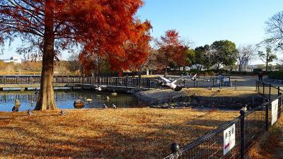 伊丹市 スポーツセンター~昆陽池公園~スポーツセンター経由自宅までの街歩き 上巻。