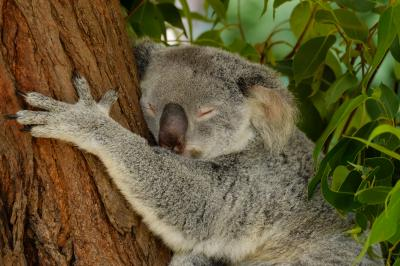 ついに念願のオーストラリアへ。(前編)