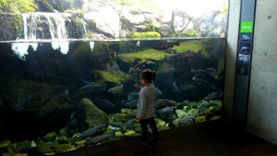 真冬に子供と那須塩原で遊ぶ!(水族館)