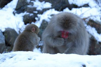 今年の旅納めは温泉猿でウッキウキ!