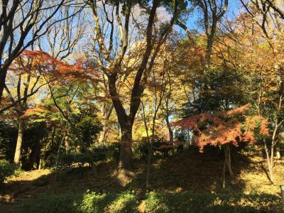 2017年12月7日 上野公園散歩
