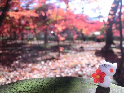 平林寺の紅葉♪~2017~